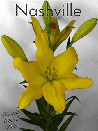 Li  La Yellow