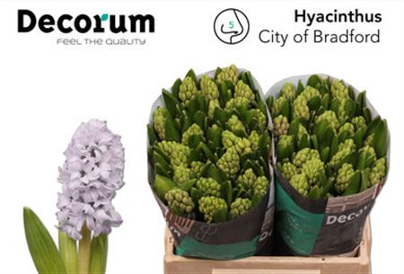 Hyac City Of Bradfor