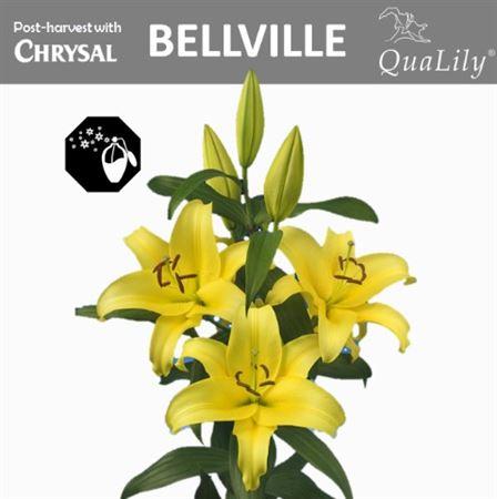 Li Ot Bellville 4+