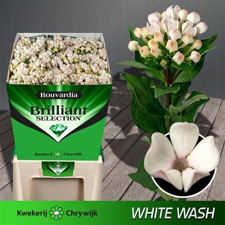 Bou En White Wash