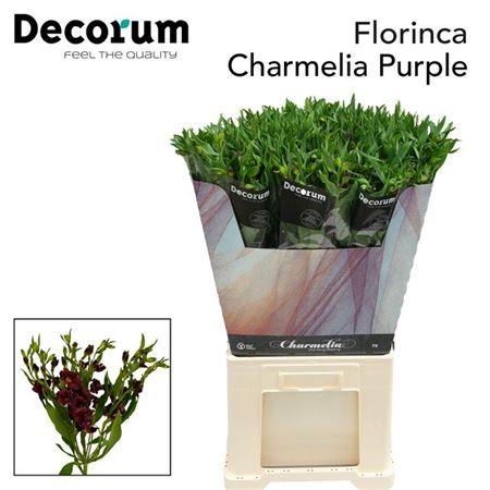 Alstr Flor Charm Purple 70cm