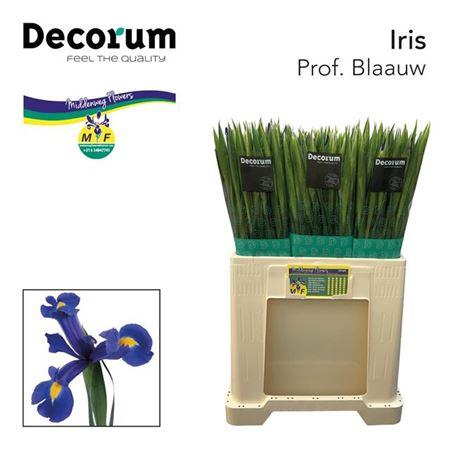 Iris Prof Blaauw