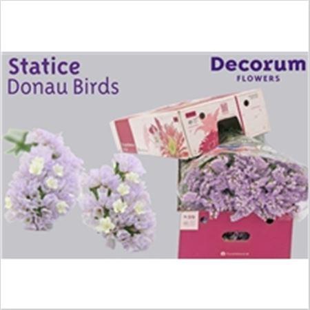 Statice Dutch Donau Birds 60cm
