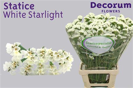Statice Dutch White Starlight 75cm
