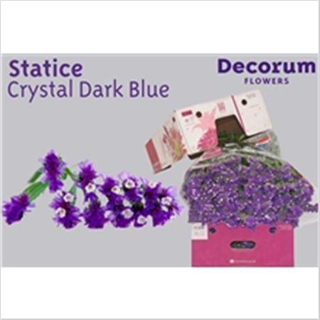 Statice Dutch Crystal Dark Blue 60cm