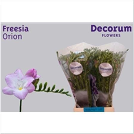 Fr En Orion Decorum