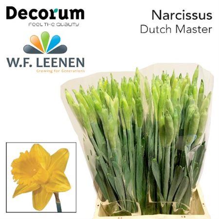 Narc Dutch Master Decorum
