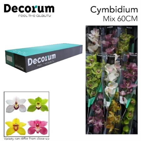 Cymb   Mix Decorum *9