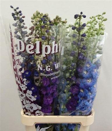 Delph  El Mixed