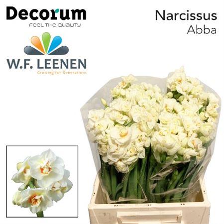 Narc Abba Decorum