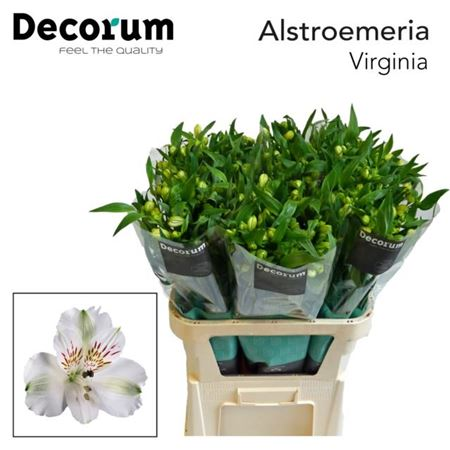 Alstr Virginia Decorum