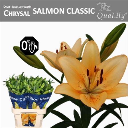 Li La Salmon Classic 5+