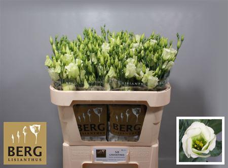 Eust E Piccolo Green
