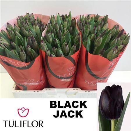 Tu En Black Jack