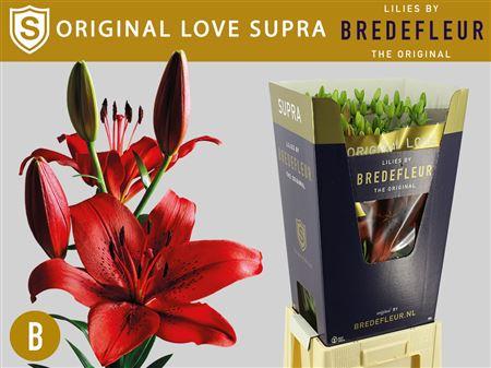 Li La Original Love Supra 4+