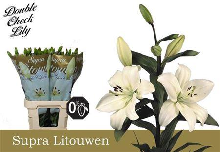 Li La Litouwen 5+ Supra