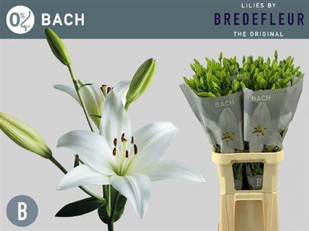 Li La Bach 4+