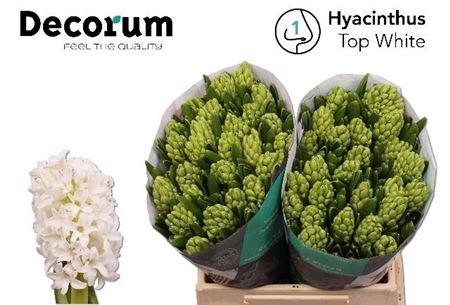 Hyac Top White Decorum