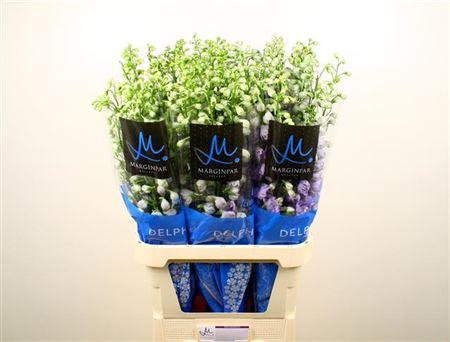 Delph El Cent Lavender Import