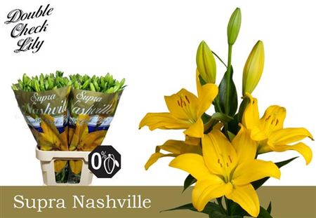 Li La Nashville 5+ Supra