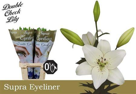 Li La Eyeliner 5+