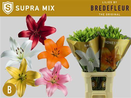 Li La Mix In Bucket 5 Colours Bredefleur Supra