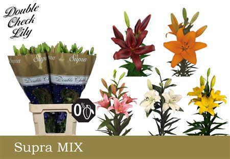 Li La Mix In Bucket 5 Colours Double Check Supra