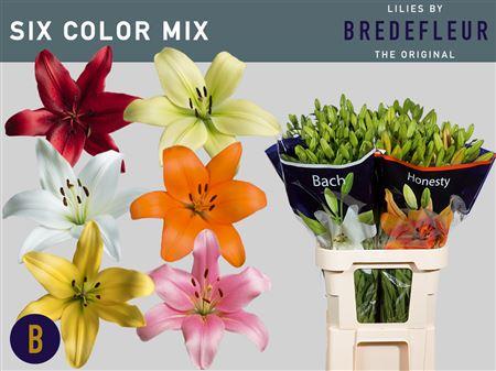 Li La Mix In Bucket 6 Colours Bredelfeur