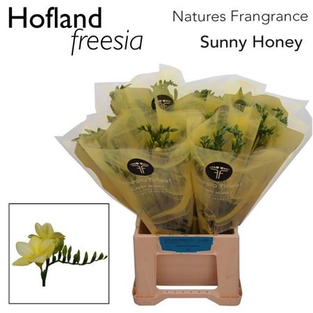 Fr En Finest Sunny Honey