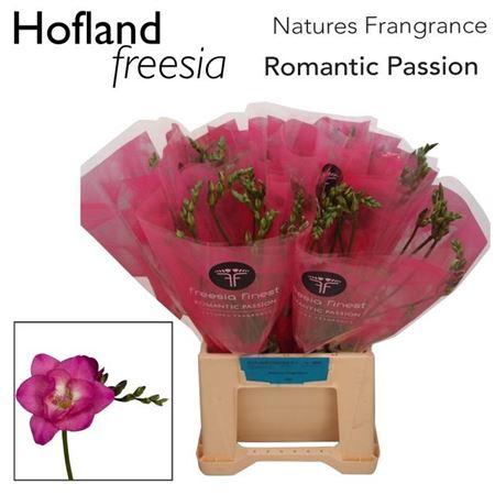 Fr En Finest Romantic Passion
