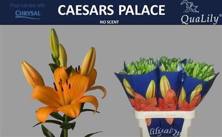 Li La Caesars Palace