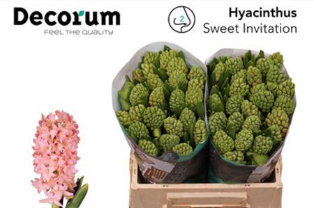 Hyac Swee Invitation Decorum