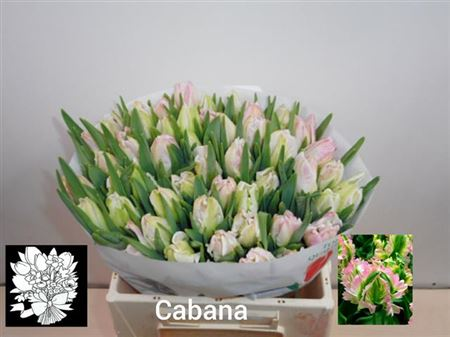 Tu Pa Cabanna