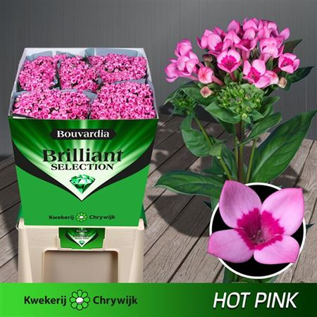 Bou En Hot Pink