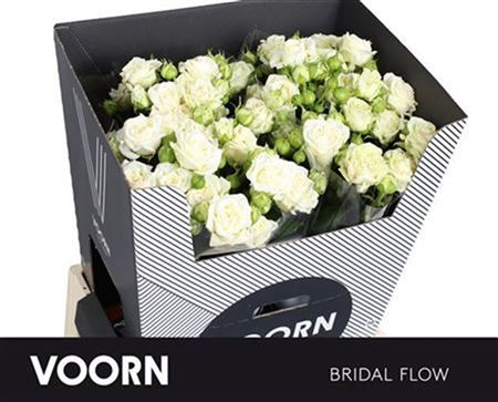 R Tr Bridal Flow