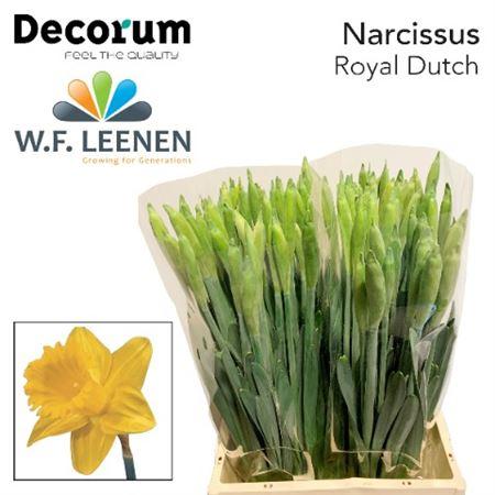 Narc Royal Dutch Decorum