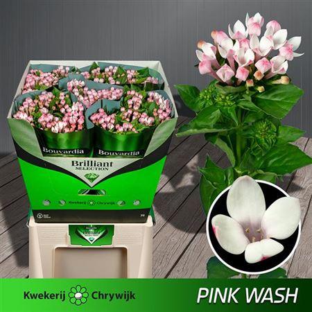Bou En Pink Wash